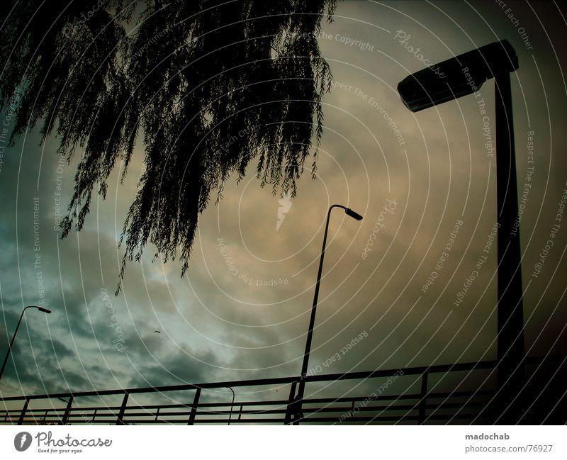 CANDLELIGHT Himmel Natur Baum Wolken dunkel Gefühle Herbst Freiheit fliegen Stimmung oben Wetter fantastisch Klima Schönes Wetter Brücke