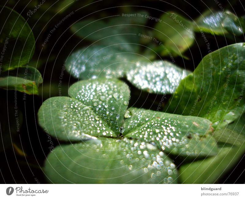 A Million Tears Pflanze grün Sommer rot Leben Blüte Glück Garten hell Regen träumen frisch Wassertropfen nass Seil Kugel