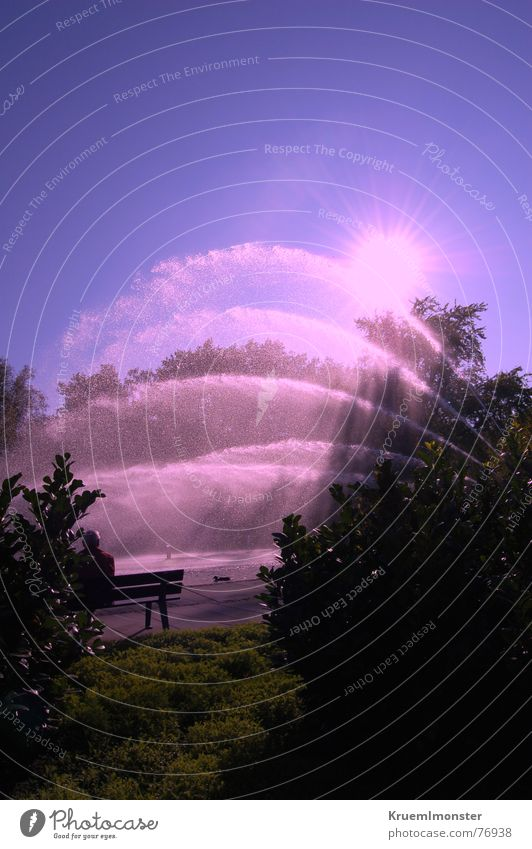 Pinke Wasserfontäne rosa Himmel Sonne Sonnenlicht Sonnenbad außergewöhnlich Baum Sträucher Schattenspiel Sonnenstrahlen Licht Wassertropfen erstarren Herbst