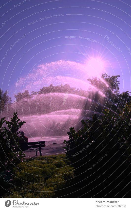 Pinke Wasserfontäne Wasser schön Himmel Baum Sonne blau Sommer Leben Herbst Bewegung hell Beleuchtung rosa Wassertropfen Bank Sträucher