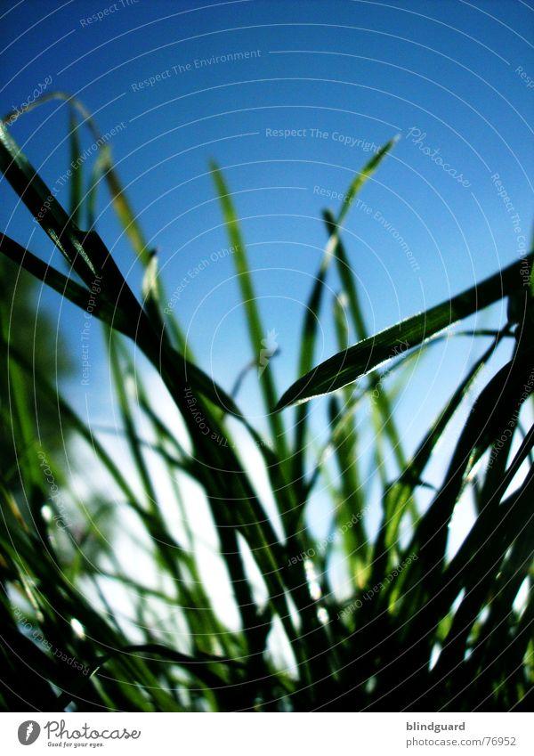 Don't Smoke ... Gras Wiese Froschperspektive grün weiß Natur Durchblick Himmel Sommer tief unten Rasenmäher Wachstum Wind blau meadow Garten hoch sky blue white