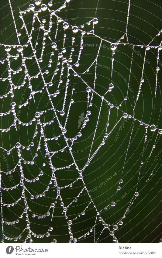 niemand zuhause Spinnennetz rein Morgen Herbst Wassertropfen Muster Wohnung vermieten Seil Klarheit Zerstörung Natur leerstehend