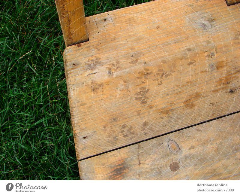 Katzen-Tatzen Wiese Gras Katzenpfote Pfote Fußspur Fingerabdruck Holz gelb-orange frisch grün feucht nass ursprünglich rustikal Ungarisch laufen überzogen