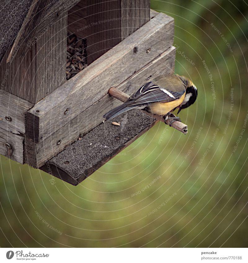 rund um die uhr Garten Vogel fliegen füttern hocken sitzen Überleben Meisen Kohlmeise Futterhäuschen Vogelfutter Stab Holzhaus Korn Essen Farbfoto