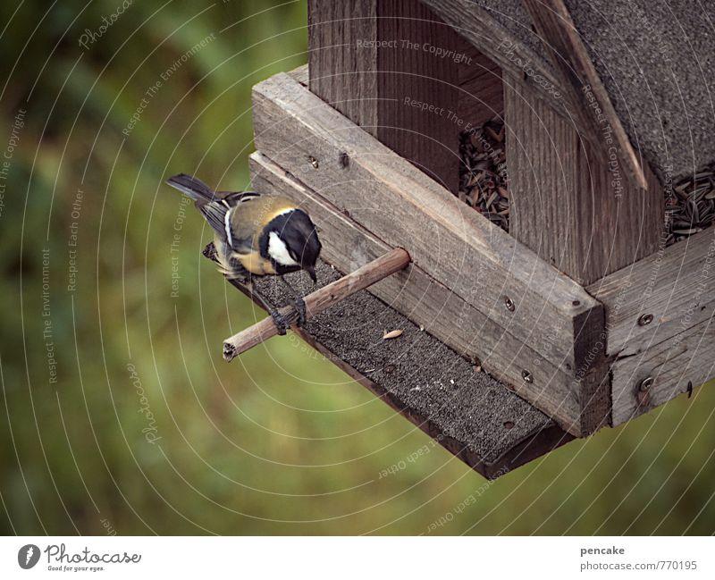 picken picken picken Garten Vogel fliegen füttern hocken sitzen Überleben Meisen Kohlmeise Futterhäuschen Vogelfutter Stab Korn Farbfoto Gedeckte Farben