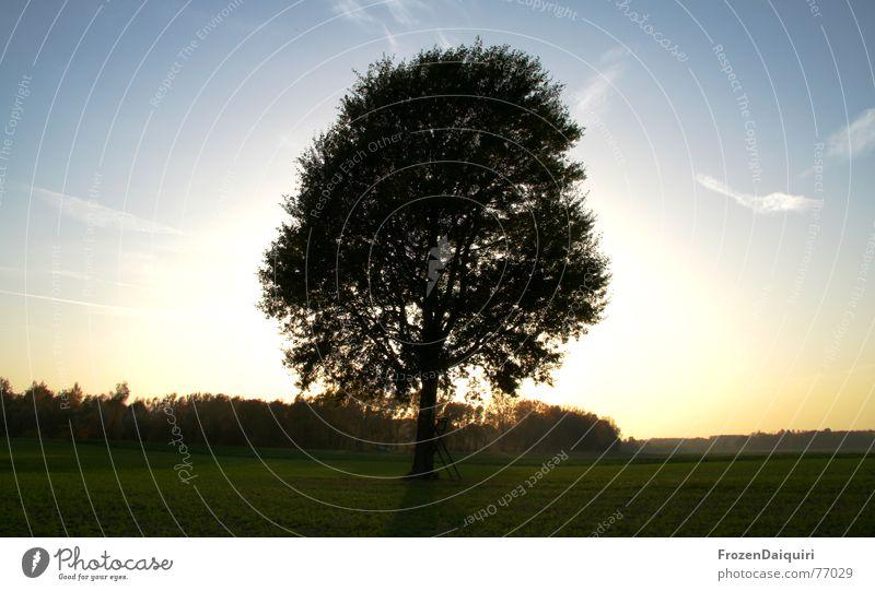 Glühender Baum No. 1 glühen Glut Gegenlicht Sonnenuntergang weitläufig Ferne Feld Gras grün HDR Wolken gelb Wald Donauland Bundesland Niederösterreich