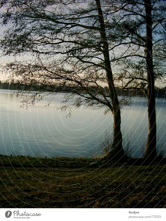 Seeblick am Abend Natur Wasser Himmel Baum ruhig Leben Herbst See Denken Hoffnung Romantik Wunsch Sehnsucht Gelassenheit Amerika Gedanke