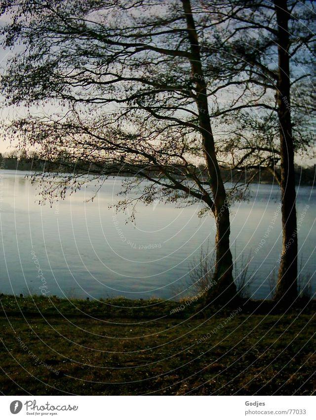 zwei Bäume stehen am Seeufer Baum Abend Dämmerung Herbst ruhig Romantik Gelassenheit Sehnsucht Außenaufnahme Denken Gedanke Wunsch begreifen Himmel