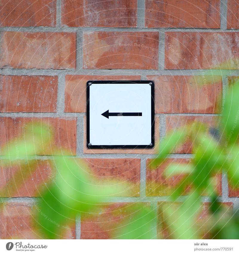 Beschilderung Pflanze weiß Blatt schwarz Wand Mauer Fassade Schilder & Markierungen Sträucher Erfolg Hinweisschild Zeichen Pfeil Backstein Karriere links