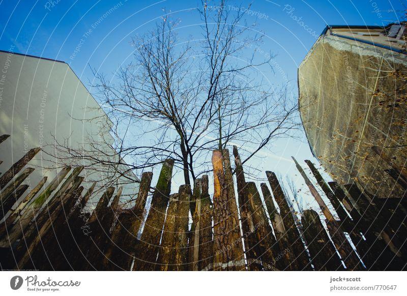 geheimnisvoll l Mut zur Lücke Stadt Baum Winter Zeit außergewöhnlich Freiheit Häusliches Leben Perspektive Kreativität groß einzigartig Schutz