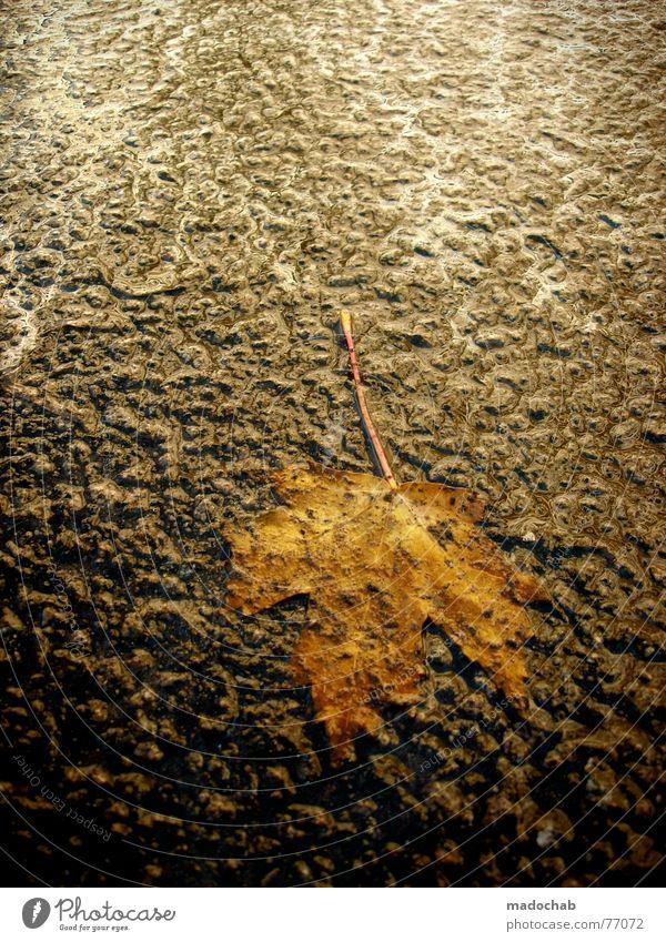 DROP IT! Winter Blatt Straße Herbst kalt Gefühle Regen Eis Erde Wind Wildtier frisch Boden Hoffnung Bodenbelag fallen
