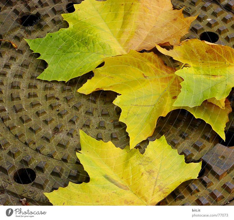 wie tief kann man eigentlich noch fallen ?? II abwärts Gully Herbst Blatt Stimmung Drehung Baum mehrfarbig Oktober November Eindruck Monat Jahr Jahreszeiten