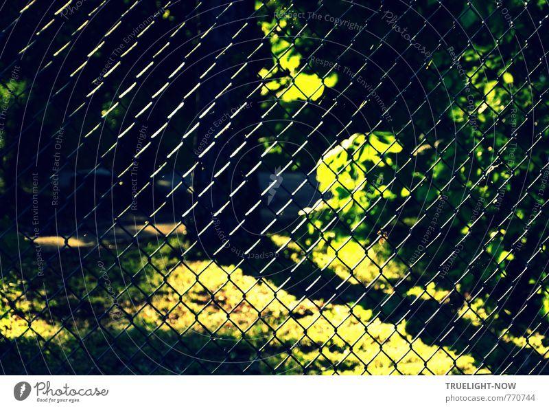 Sonnengeflecht Natur Pflanze Sommer Baum ruhig Blatt Wald Umwelt Gras Freiheit Garten Metall Park Sträucher Schönes Wetter