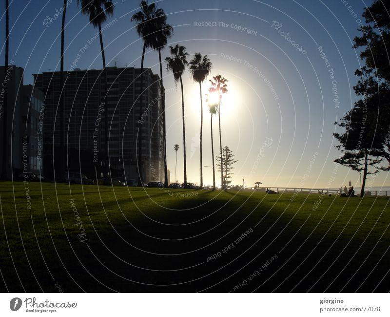 Sun of San Diego part1 Himmel Strand Park USA Palme Kalifornien San Diego County