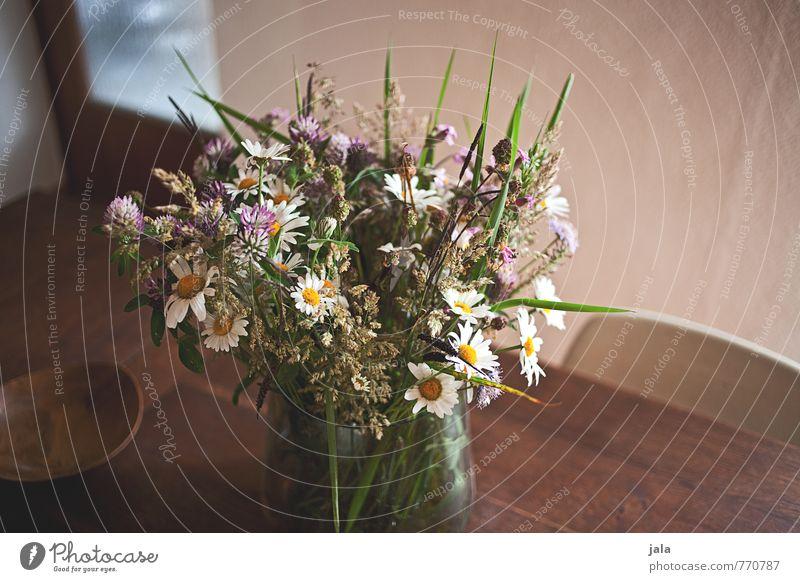 blumenstrauß Häusliches Leben Wohnung Innenarchitektur Dekoration & Verzierung Stuhl Tisch Küche Pflanze Blume Blüte Wildpflanze Blumenstrauß Vase ästhetisch