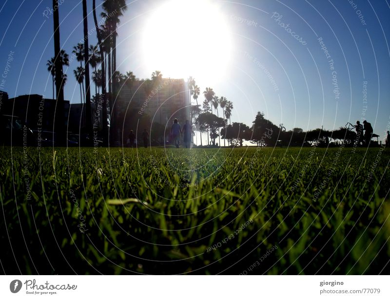 Sun of San Diego part2 Palme Strand Park Licht Himmel sun grass light ocean San Diego County USA america contra-jour outdoor shooting contrast sky clouds tree