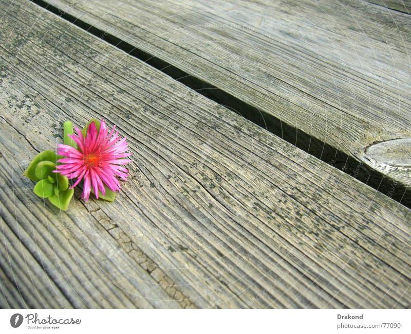 Autumn flower Holzmehl Sommer Natur springen Tanzfläche rosa Spanien Blume Herbst Frühling Pflanze Bodenbelag grün Baum Tisch Schiffsplanken Andalusien autumn