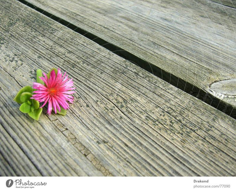 Autumn flower Natur Baum Blume grün Pflanze Sommer Herbst springen Frühling Holz rosa Tisch Bodenbelag Spanien Anordnung