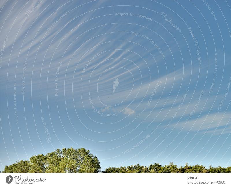 Raum und Zeit Umwelt Natur Landschaft Himmel Wolken Sommer Wetter Schönes Wetter Baum Blatt ästhetisch außergewöhnlich blau grün Streifen Strukturen & Formen