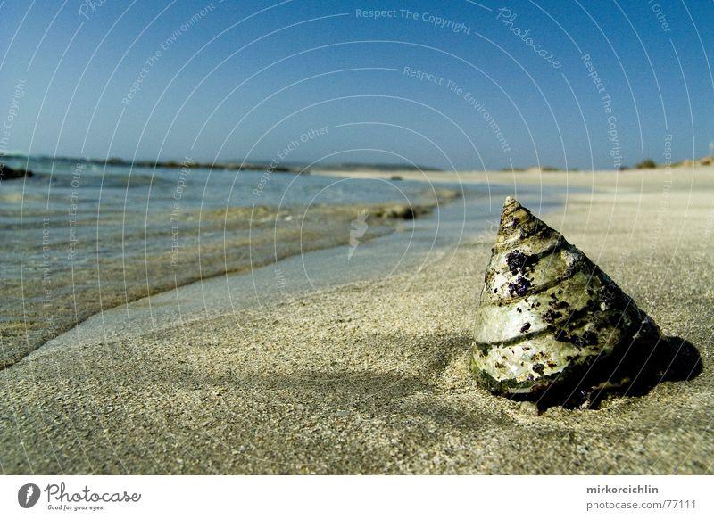 Paradies Muschel Strand Meer blau Physik heiß Ferien & Urlaub & Reisen schön Australien Perth Nationalpark Western Sand Himmel Wasser Wärme Freiheit kalbarri