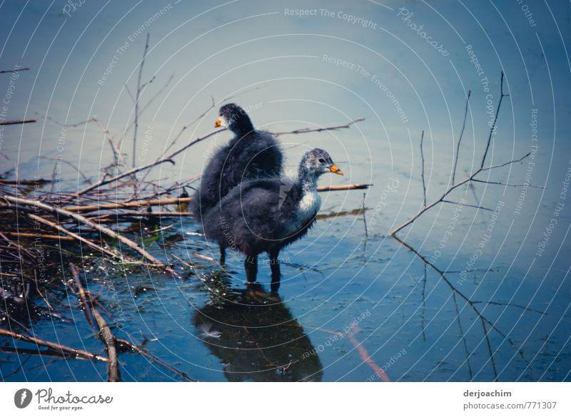 Erster Ausflug Natur blau weiß Wasser Erholung ruhig Freude Tier Glück Deutschland Zufriedenheit Idylle Sträucher ästhetisch beobachten fantastisch