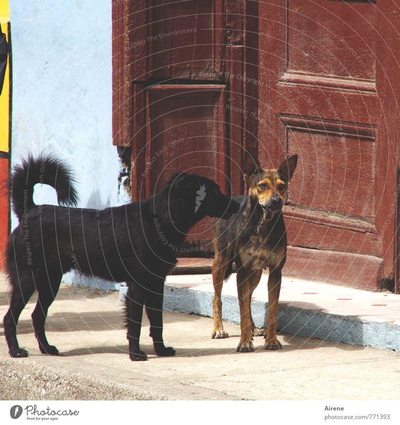 Wollen wir spielen? Hund blau rot Haus Tier Wand Mauer Spielen braun Freundschaft Tür warten beobachten Kommunizieren Freundlichkeit Tor