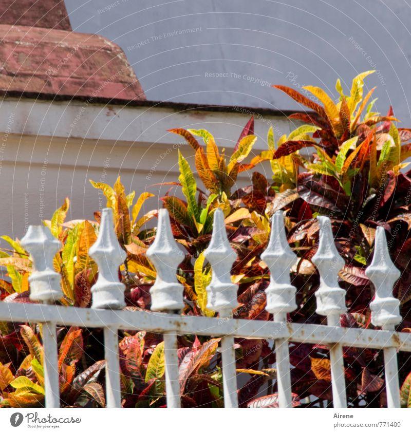schwacher Auftakt weiß Pflanze rot Park Wachstum Sträucher Spitze Kirche Blühend kaputt Zaun exotisch gebrochen Gitter Friedhof matt