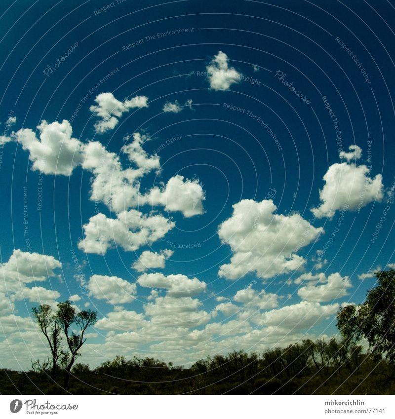 Real Himmel Baum blau Wolken authentisch Australien Westen