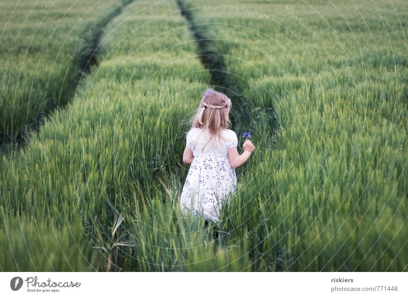 wilde kornblume ii Mensch Kind Natur Pflanze grün Sommer Erholung ruhig Landschaft Mädchen Umwelt feminin Frühling natürlich träumen Feld