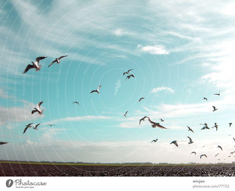 aero Natur Tier Himmel Wolken Wetter Feld Vogel Schwarm fliegen schön viele blau durcheinander Hintergrundbild flach Ebene Schweben Flucht Richtung Möwe Windzug