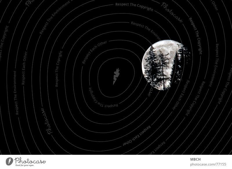 Halloween Baum gehen Schweiz Tanne Mond rückwärts Vollmond Chur
