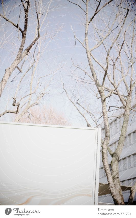 Die Botschaft. Himmel blau Baum Herbst Gebäude grau leer kahl bleich Plakat Plakatwand