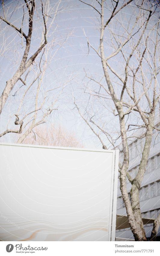 Die Botschaft. Himmel Herbst Plakat Plakatwand blau grau Gebäude Baum kahl bleich leer Farbfoto Außenaufnahme Menschenleer Textfreiraum unten Tag