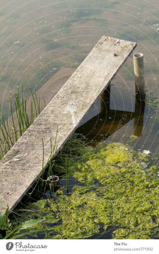 Algenpest Natur grün Wasser Pflanze Sommer Umwelt Schwimmen & Baden dreckig Fluss Seeufer Flussufer Schifffahrt Anlegestelle Segeln Angeln Umweltschutz