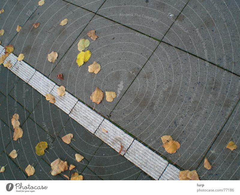 Boden: Herbstedition Blatt Straße Stein verrückt Bürgersteig Fahrradweg Kiel Bodenbelag Fliesen u. Kacheln diagonal Farbfoto Außenaufnahme Menschenleer Neigung