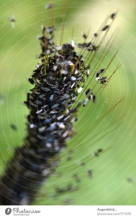 Familientreffen... Tier schwarz Bewegung grau Zufriedenheit Fröhlichkeit Lebensfreude Freundlichkeit Vertrauen silber Schwarm Sympathie Tierfamilie