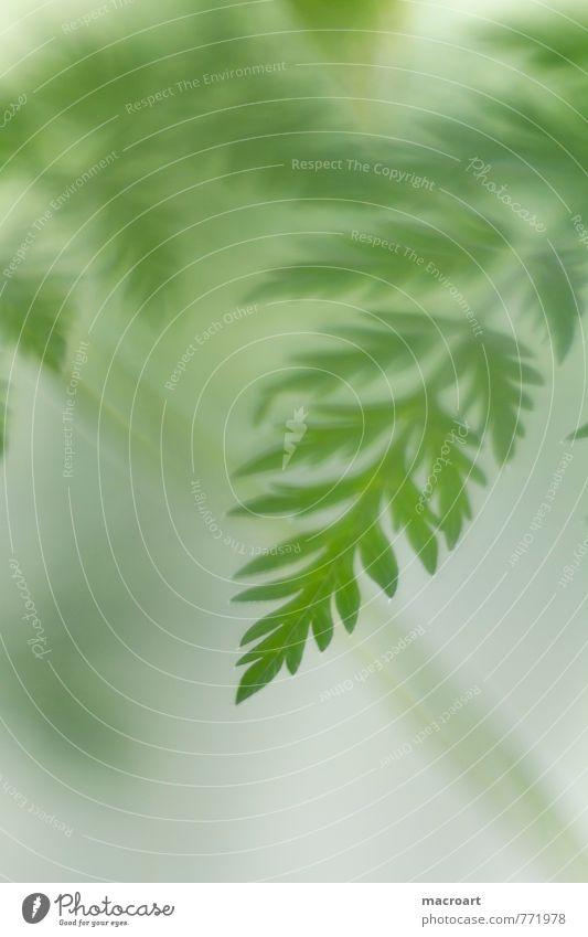 grün Farn Blatt Natur natürlich Pflanze pflanzlich Hochformat Sommer Frühling Wachstum Nahaufnahme Makroaufnahme Detailaufnahme
