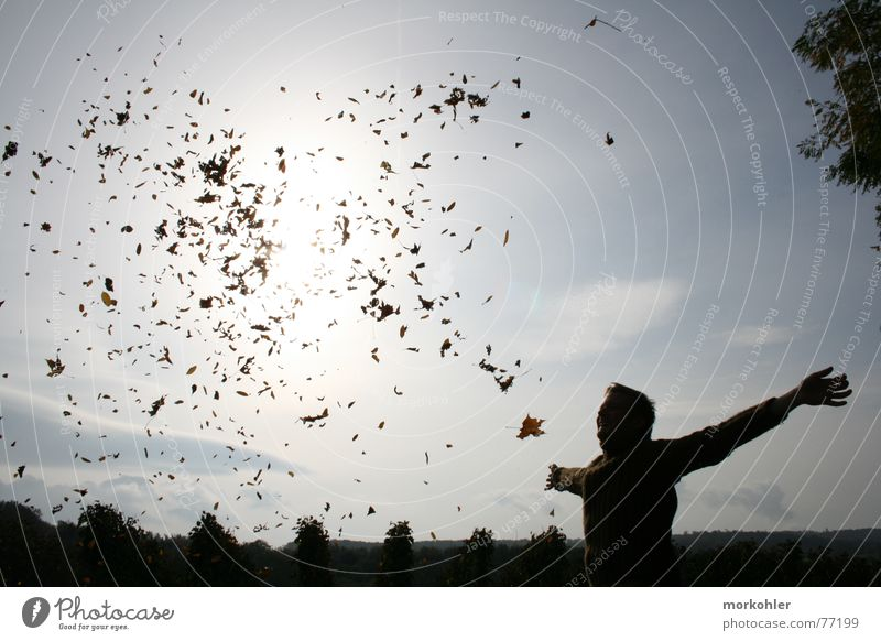 Herbst Mann Sonne Blatt Wind Sturm Weinberg