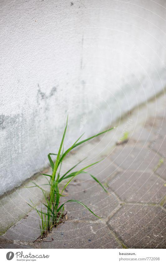 HH-Peute | gras. Natur grün weiß Wand Straße Wiese Wege & Pfade Gras Mauer grau natürlich Stein Garten Park Fassade Kraft