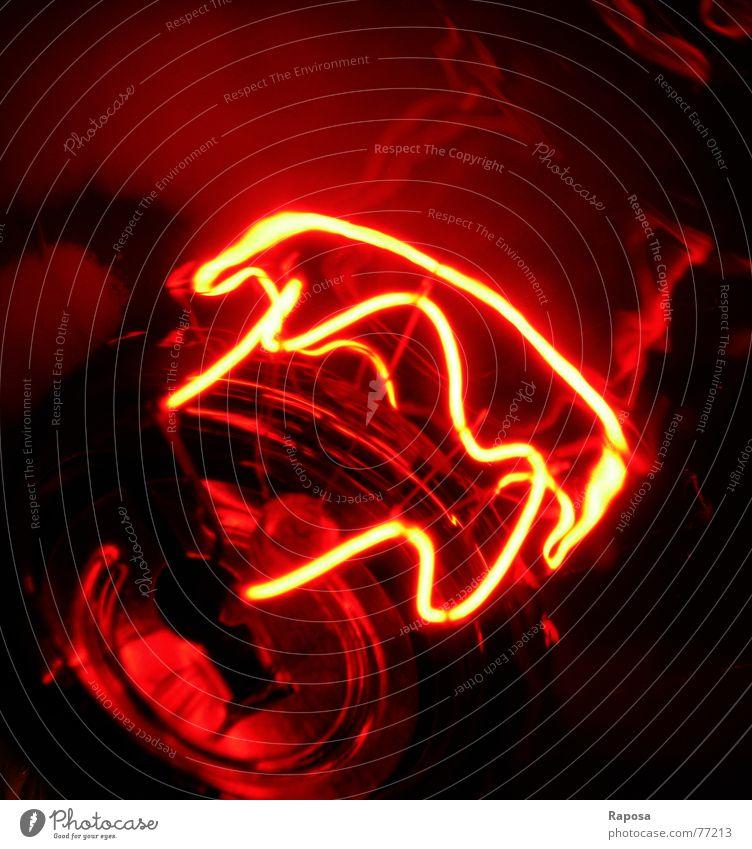 lightshow Lampe Rotlichtlampe rot Elektrisches Gerät elektrisch Glühbirne Elektrizität Draht Licht Kabel an aus Wärme führen