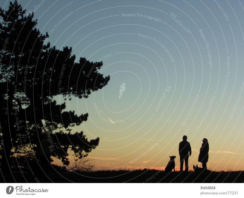 Fast-Nacht Mensch Himmel Baum schön blau rot ruhig schwarz dunkel Herbst Hund orange warten Horizont groß Romantik