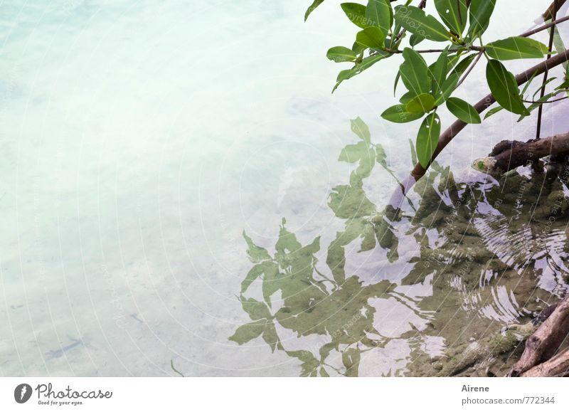 einfach so'n Foto Landschaft Wasser Pflanze Sträucher Blatt Grünpflanze exotisch Mangrove Urwald Küste Meer Moor Sumpf hell grün Reflexion & Spiegelung bleich
