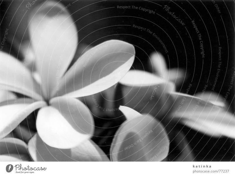 blumen Blume Sommer Frühling Garten Freiheit Trauer Blühend Vor dunklem Hintergrund