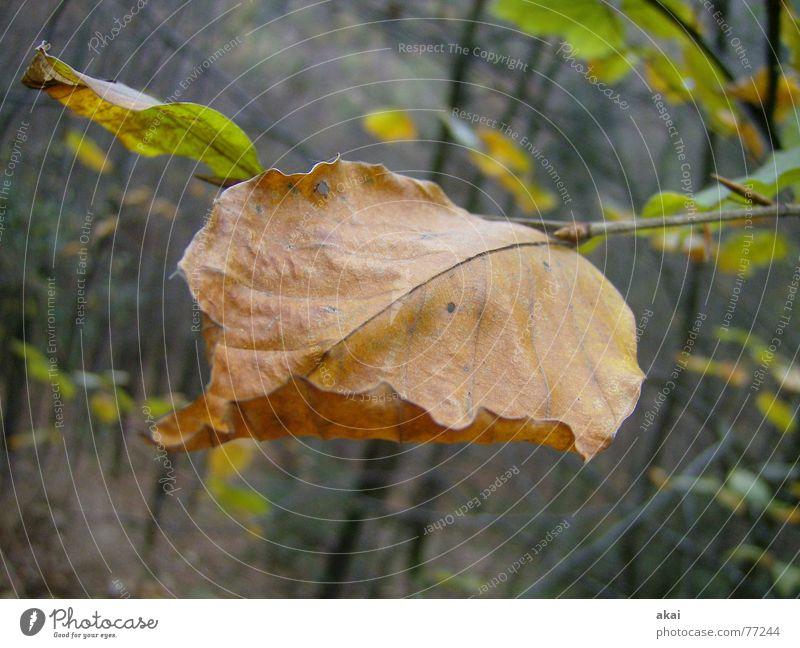 Vergänglichkeit Natur alt Baum Blatt Wald Herbst Tiefenschärfe Zweig Schwarzwald Freiburg im Breisgau Schauinsland
