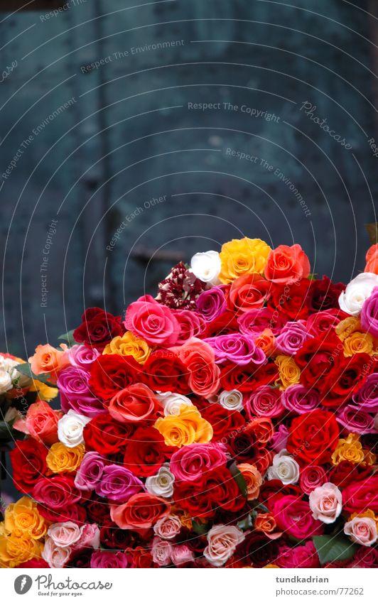 Bed of Roses grau Eisen Blume Wochenmarkt mehrfarbig mehrere Außenaufnahme Tür schnittblume Freude viele Valentinstag Tag