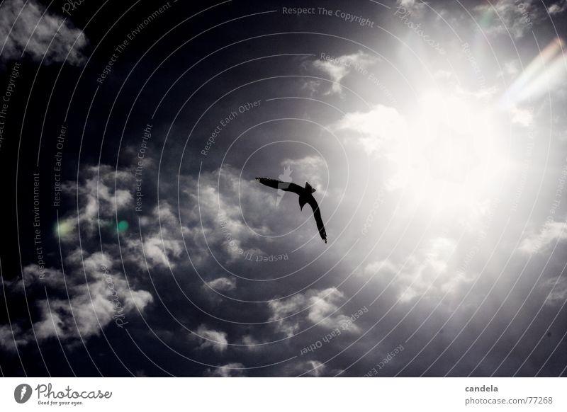 seagull Meer Neuseeland Christchurch Strand Wolken Vogel Möwe blenden neuseelan water bird fly clouds fliegen Lachmöwe sun black white b/w glare Silhouette