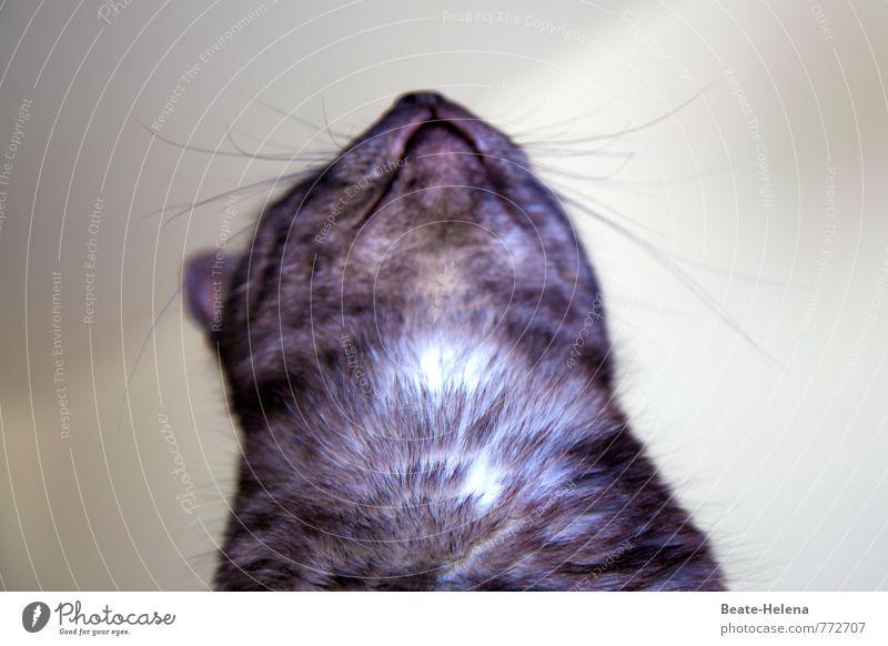 hier kraulen bitte! Leben Haustier Katze genießen warten Erfolg Freundlichkeit Glück Wärme weich Gefühle Zufriedenheit Leidenschaft anhänglich Spielen Hauskatze