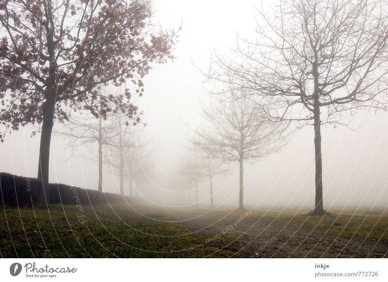 Ein langer Weg Umwelt Natur Landschaft Pflanze Herbst Winter Klima Klimawandel Wetter schlechtes Wetter Nebel Park Menschenleer Wege & Pfade Allee dunkel