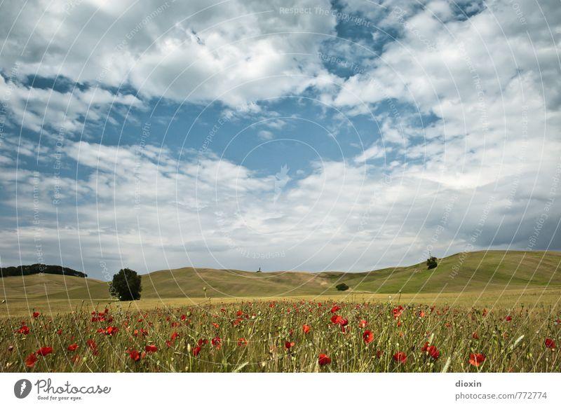 Toscana, mohn amour! Himmel Natur Ferien & Urlaub & Reisen blau Pflanze schön grün weiß Sommer rot Blume Landschaft Wolken Umwelt Wärme natürlich