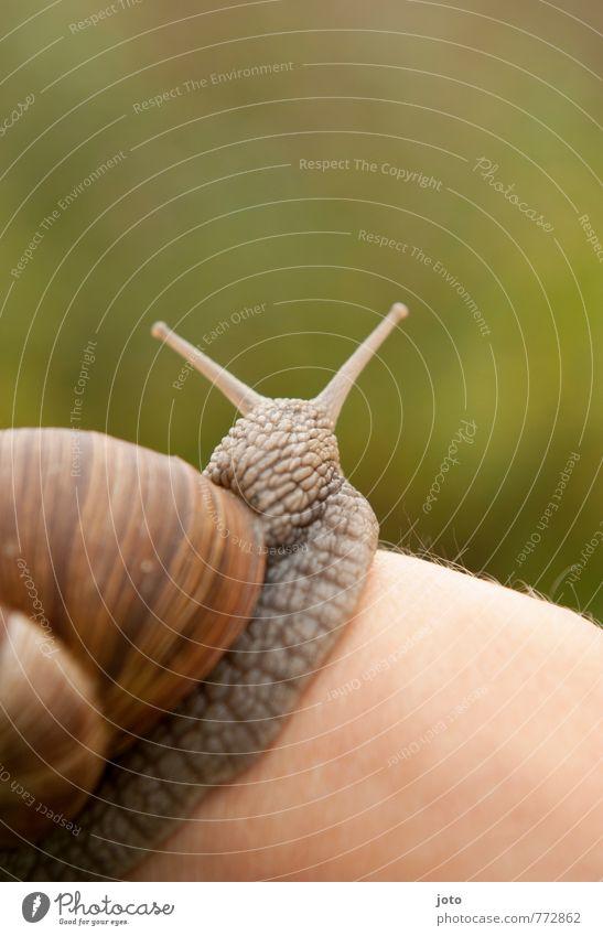 wohlig Natur grün Sommer Erholung Hand ruhig Tier Garten Zufriedenheit Idylle Wildtier Geschwindigkeit niedlich Neugier entdecken tierisch